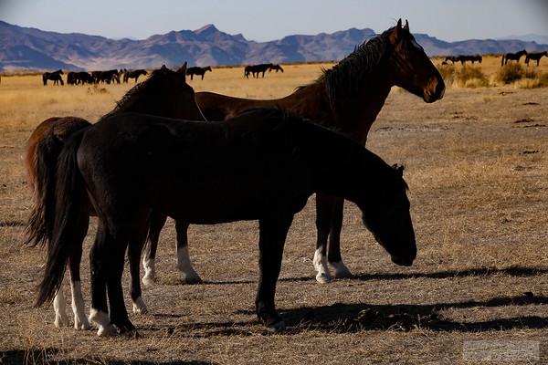 L_Blackburn_Wild Horses-30
