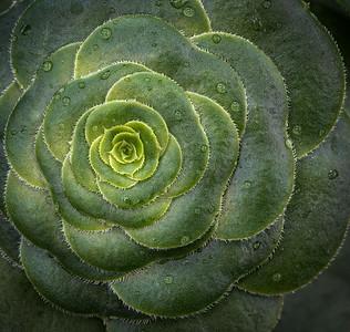 Greg_Smith_Wet_Succulent