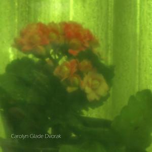 Carolyn _Dvorak-Flowers through stained glass 1