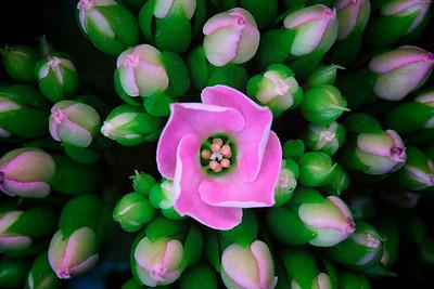 claudia_ogrady-flower2