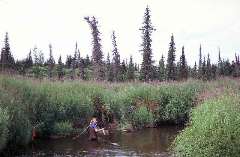 Lisa sets a Minnow trap, Homer, Alaska