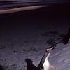 Hoiho walking up the sand dune
