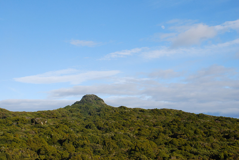 """The Summit"" (Codfish Island's highest point, 280m a.sl.)"