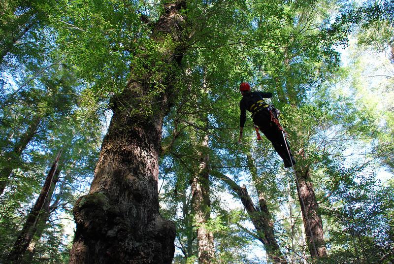 Emma tree climbing