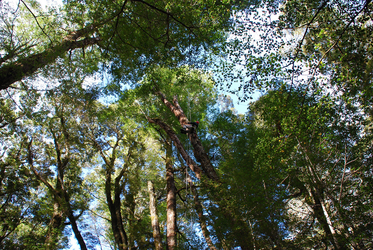 Flying into the tree canopy
