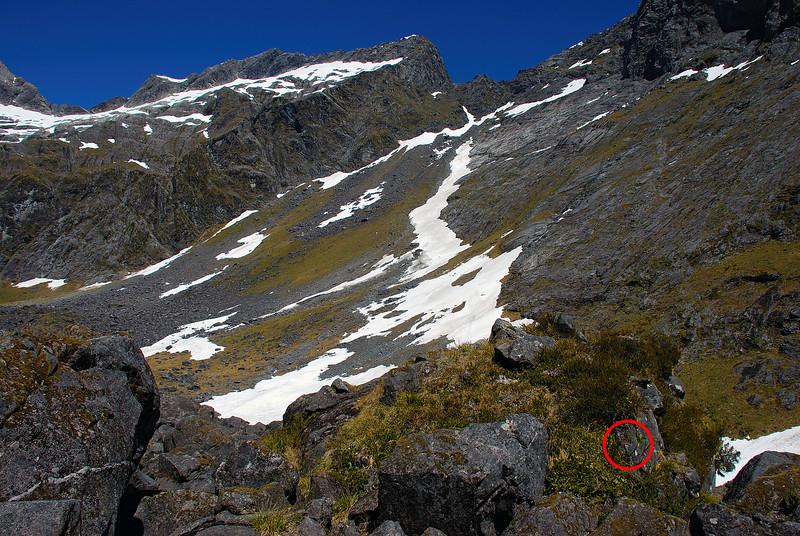 Our third rock wren nest. The Twins and Darran Pass above