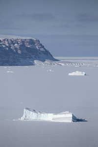 Icebergs trapped in the fast ice and Saunders Island