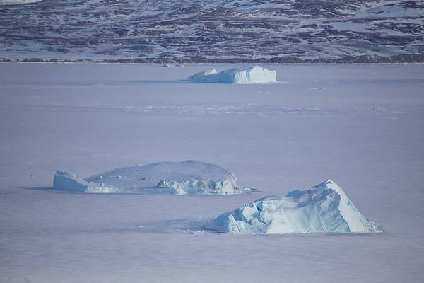 Icebergs held fast in the sea ice in Wolstenholme Fjord
