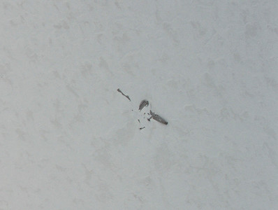 """A CAMBOT """"zoomed in"""" shot of the Kee Bird aircraft we overflew"""