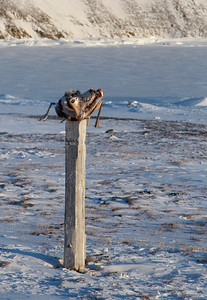 A musk ox skull with very little left on it atop a post in the middle of Dundas Village