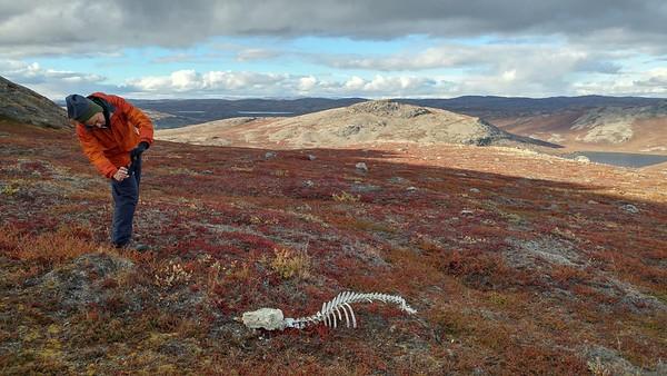 Serdar finds an old skeleton on the slopes of Mt. Evans