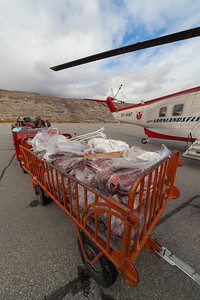 A trolley of packaged caribou and musk ox meat
