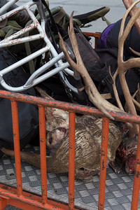 Gear with musk ox skulls and caribou antlers