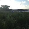 Grasses compete with the monument at site CN27. (Photo/John Sandru, UNAVCO)