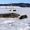 A Weddell seal pup and mother bask in front of a UNAVCO TLS instrument deployed on the sea ice in McMurdo Sound. LiDAR data is used to produce mass estimates of the mother and pup to understand their physiological relationships before weaning. A curious skua joins the scene, with Tent Island rising from the sea ice in the near distance. (Photo/Brendan Hodge, UNAVCO)
