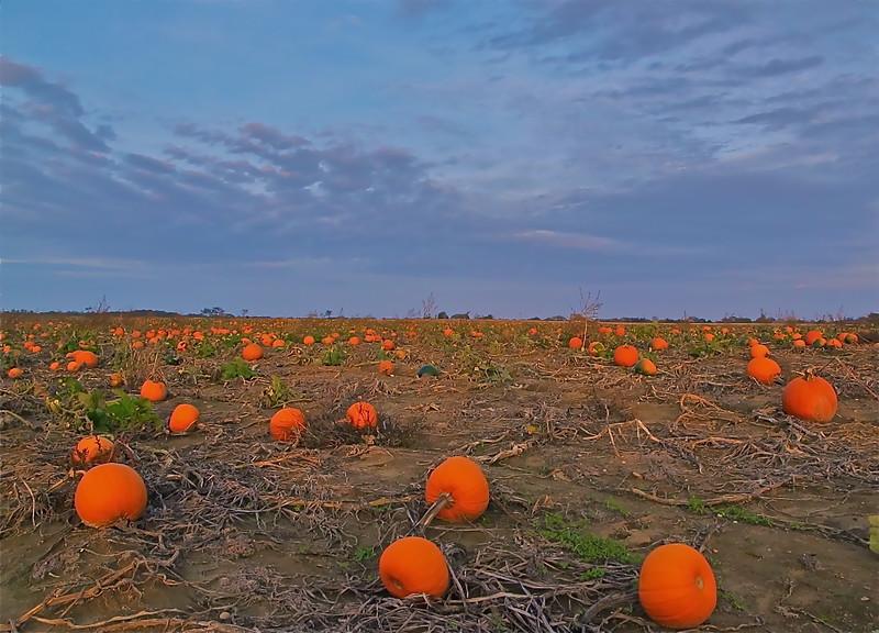 Wild Pumpkins