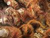 Brittle Stars - Ophiothrix spiculata, Spiny brittle star
