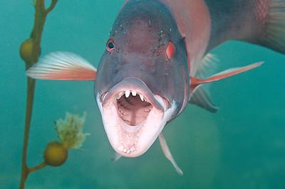 Reef & Pelagic Fish