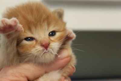4 kittens 044
