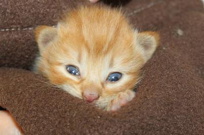 4 kittens 041
