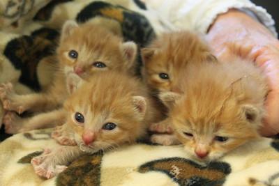4 kittens 056