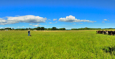 Mac Stewart waits as his dog Tigg drives the sheep towards him. Panorama from my iPhone 5.