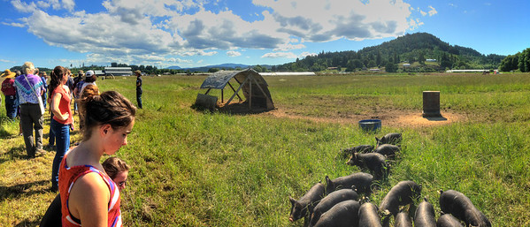 Baby Berkshires. On the fly iPhone 5 panorama.