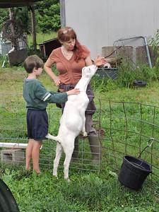 16-0603MO-Ken JenMuno GoatsbeardFarm (14)