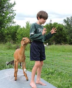 16-0603MO-Ken JenMuno GoatsbeardFarm (16)
