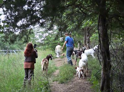 16-0603MO-Ken JenMuno GoatsbeardFarm (28)
