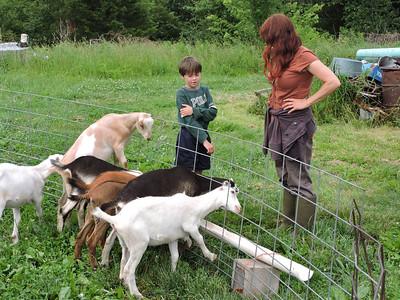 16-0603MO-Ken JenMuno GoatsbeardFarm (10)