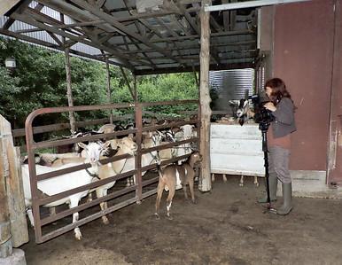 16-0603MO-Ken JenMuno GoatsbeardFarm (33)