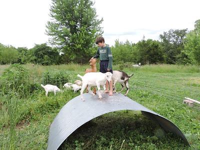16-0603MO-Ken JenMuno GoatsbeardFarm (17)