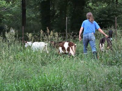 16-0603MO-Ken JenMuno GoatsbeardFarm (29)