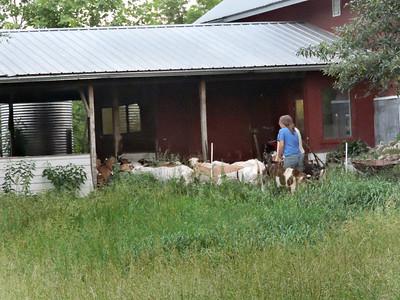 16-0603MO-Ken JenMuno GoatsbeardFarm (31)