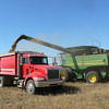 Unloading a combine hopper full of brown mustard into a grain truck