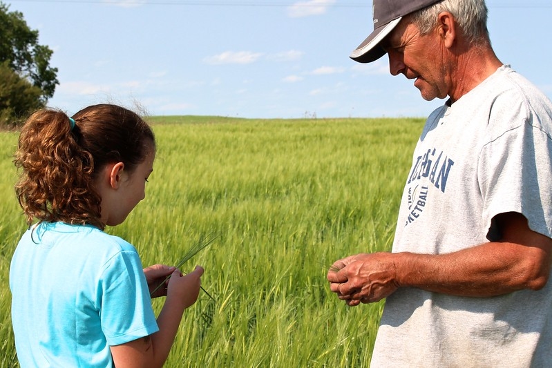 A farmer shows how to check heads of his wheat crop.  Farming is still a family business:  over 97 per cent of farms in Canada are family owned. #farmfact