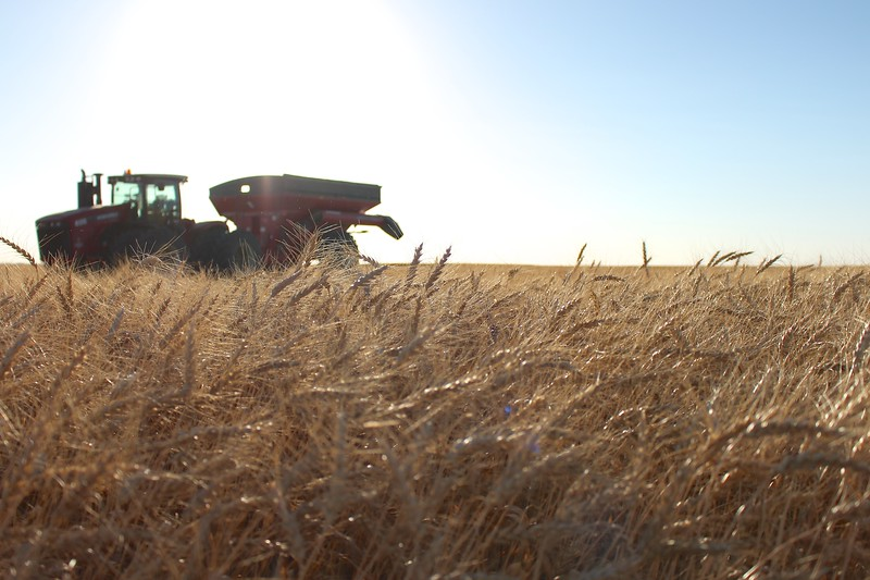 A tractor and grain cart stand behind a field of wheat that is ready to be harvested.  Saskatchewan wheat exports reached $4.2 billion in 2015, a 141% increase over the previous 10 years.  #farmfact