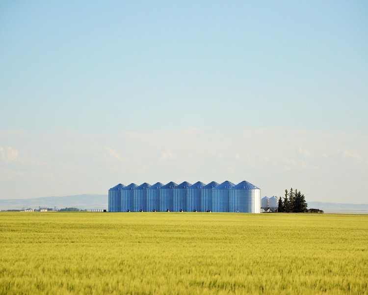 Storage bins don't have to be situated in the farm yard. Many times growers will have bins at multiple locations, closer to their fields, to make unloading grain trucks faster at harvest. Storing grain in multiple locations also mitigates against the risk of heavy snowfalls or muddy conditions in the winter or wet seasons that make it difficult to load the grain for sale.
