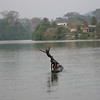 Showing off for the camera in crater lake Barombi ba Kotto, Southwest Cameroon