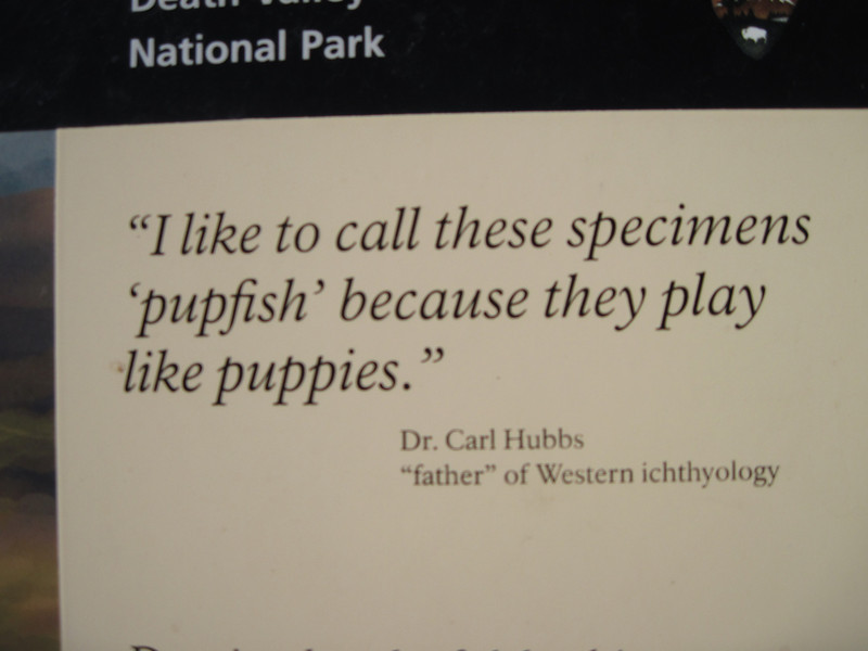 Yes, they are indeed named after puppies! Thank you, Carl!
