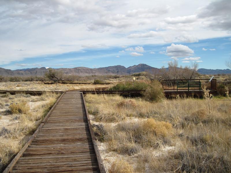 Landscape surrounding Crystal Spring, Ash Meadows National Wildlife Refuge