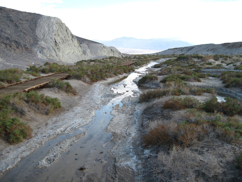 Salt creek habitat in Death Valley, home of <i>Cyprinodon salinus</i>