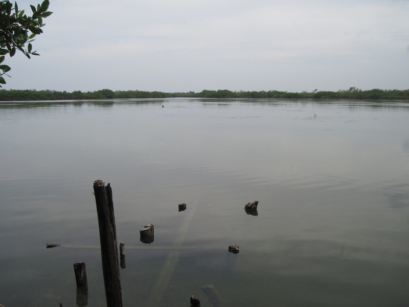 Laguna Bavaro, home of the endemic <i>Cyprinodon higuey</i>!
