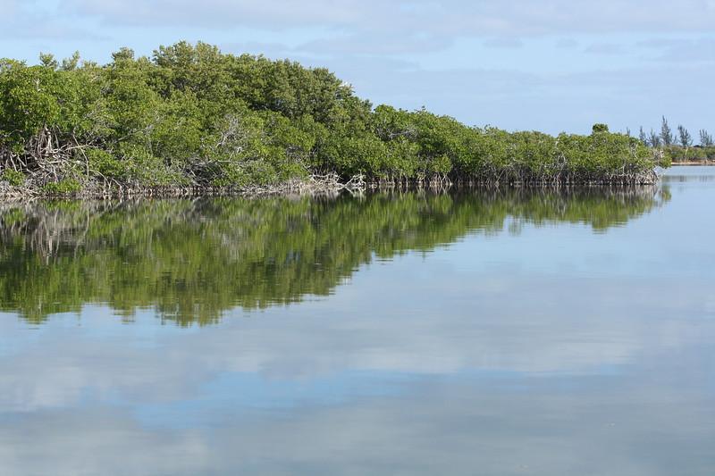 Red mangrove (Rhizophora mangle) dominated landscape of Little Lake on San Salvador Island.