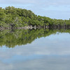 Red mangrove (Rhizophora mangle) dominated landscape of Little Lake on San Salvador Island.