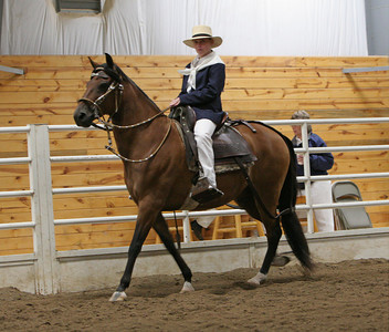 Class 8, Geldings 7 and Over, Amateur Performance