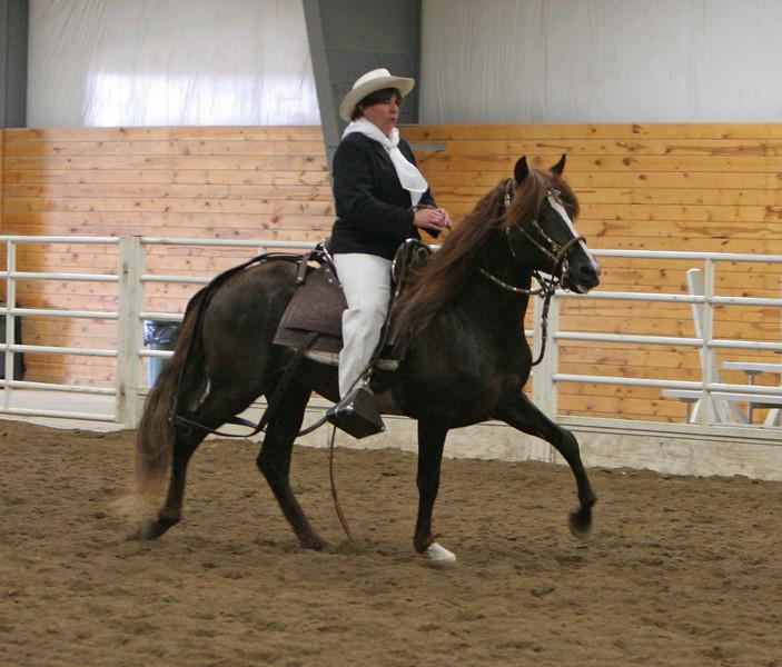 2182 stallions 4to6 15