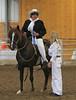 2197 stallions 4to6 15