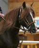 2186 stallions 4to6 15
